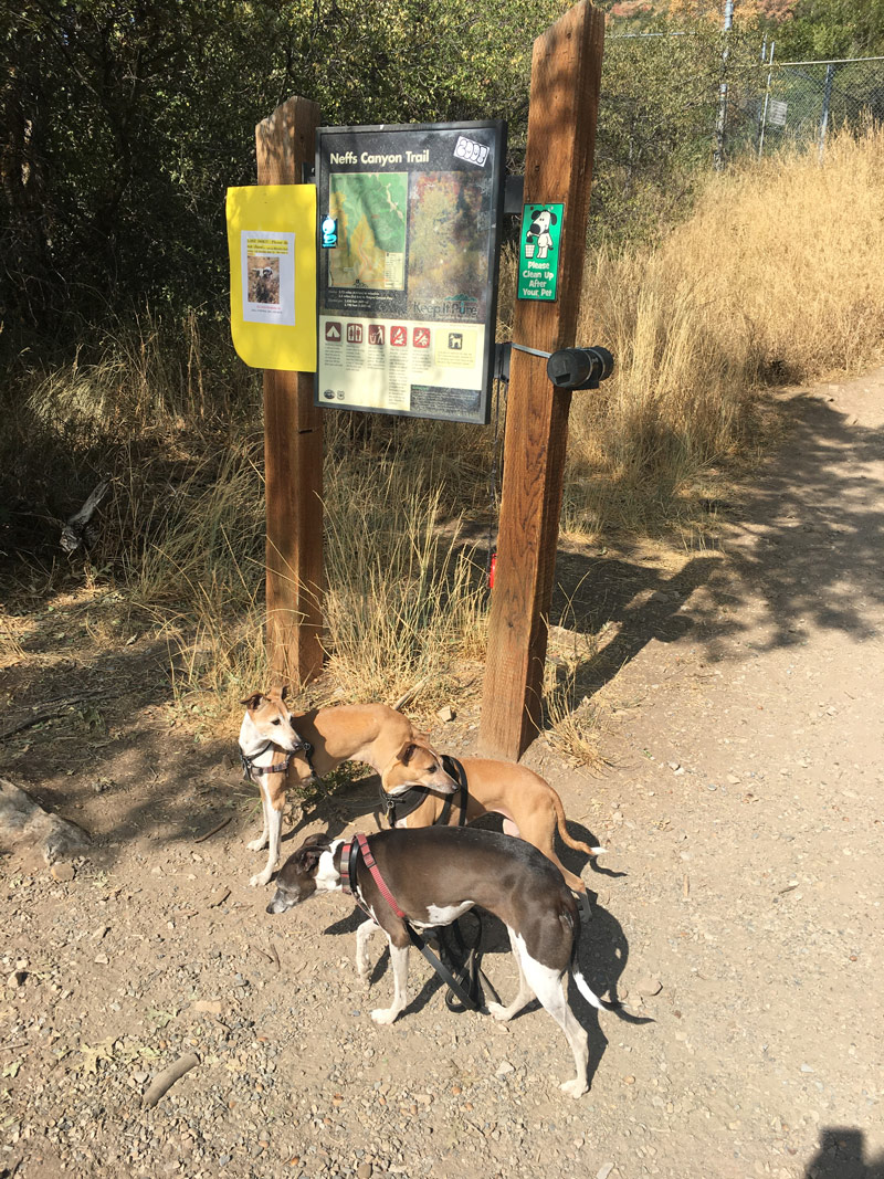 Neff's Canyon trailhead with the Italian Greyhounds