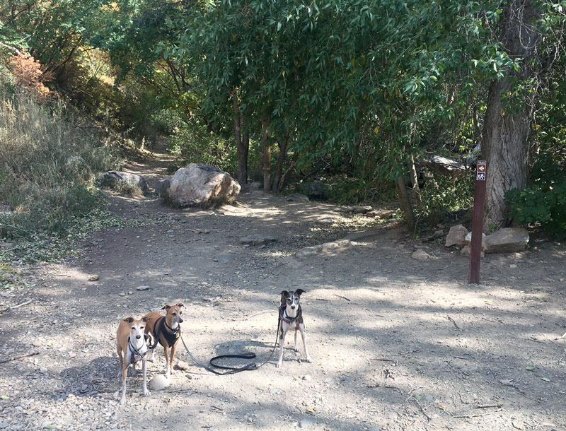 Trail dogs at the beginning of Neff's Canyon