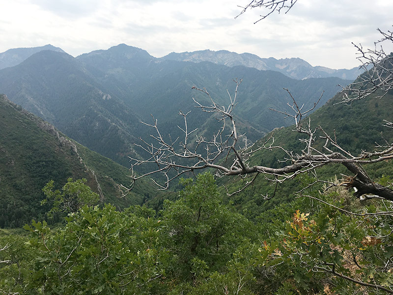 Views of the canyons behind MillCreek canyon at the Grandeur Peak overlook