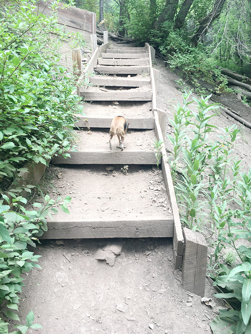 Who's got a nice butt? This girl! My little mountain goat tackling the stairs.