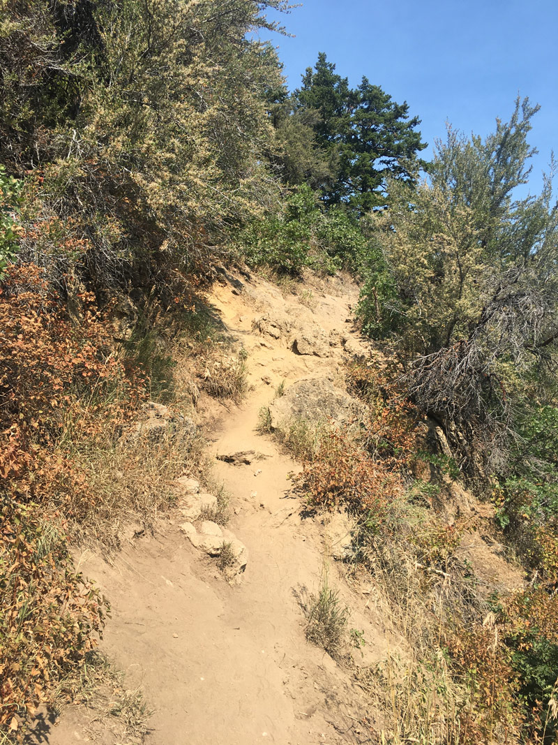 An upper trail on Desolation in Mill Creek Canyon
