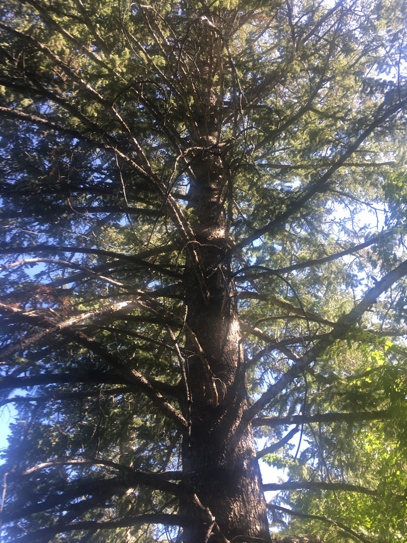 My spirit tree - grounding and strengthening