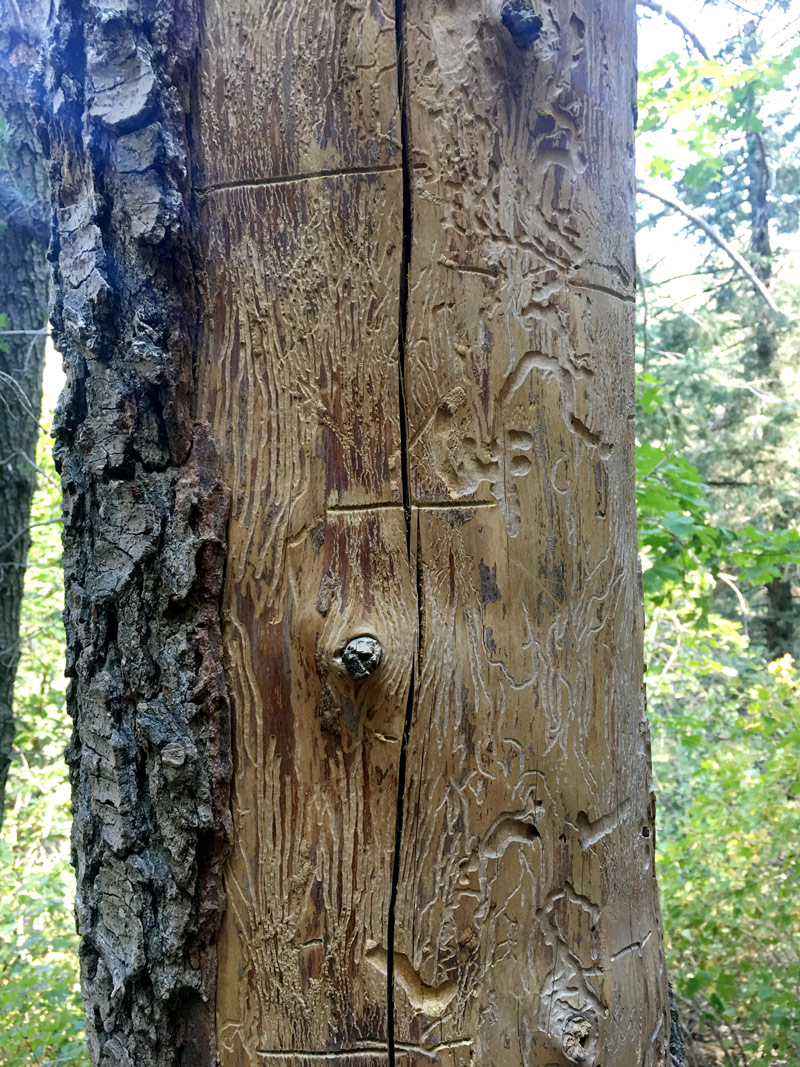 Etched Trunk - beauty in nature - inspiration