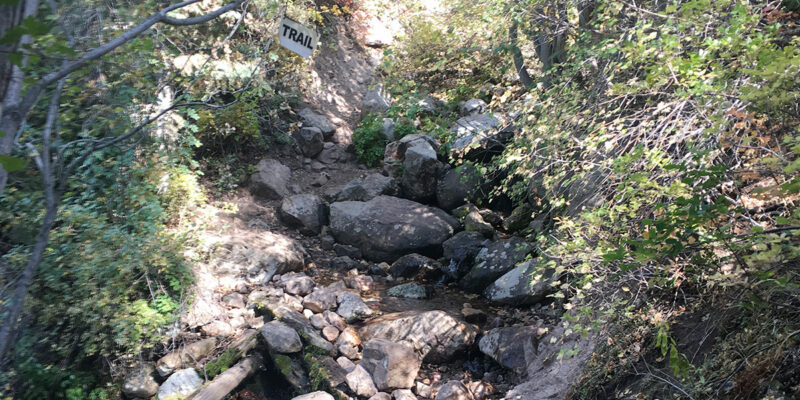 Neff Canyon Trail into the Wasatch