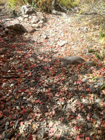Pretty red leaves already on the ground