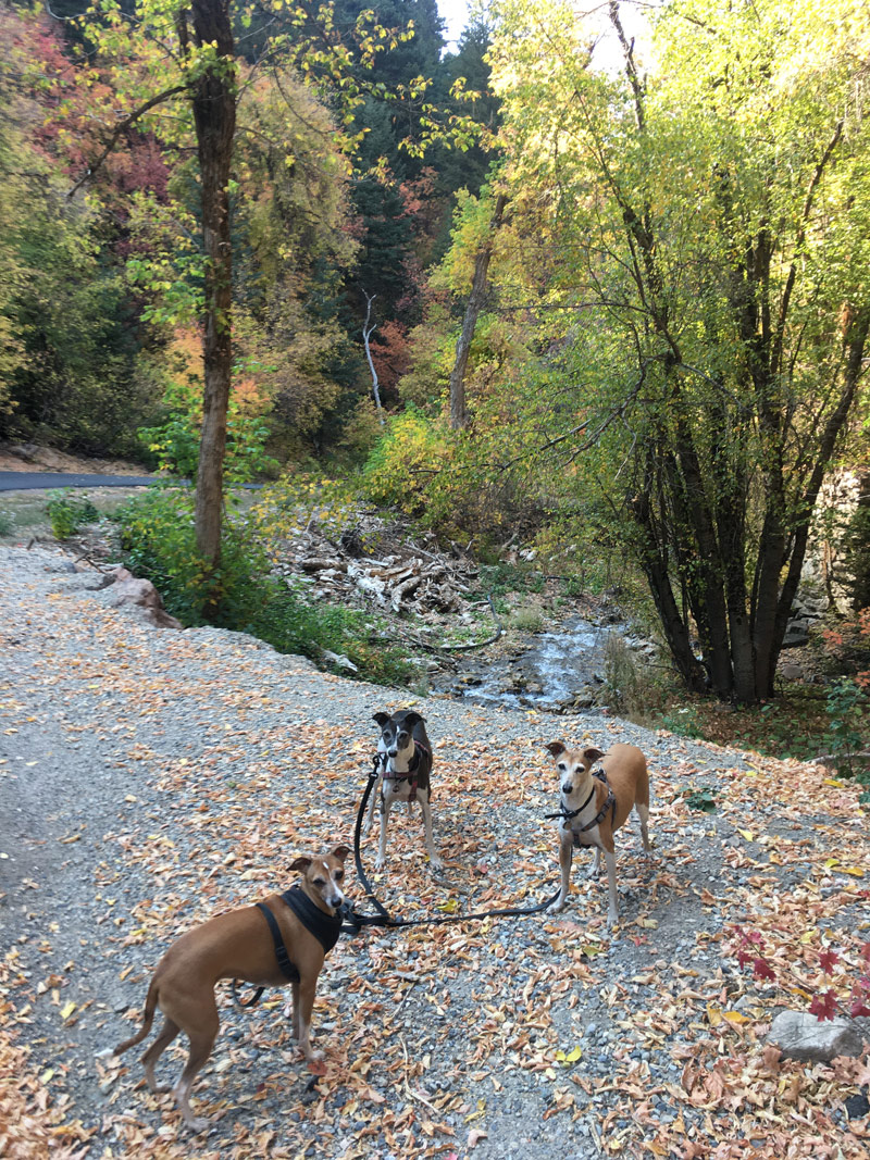 We really enjoyed the beautiful colors as we walked back down the paved road on Porter Fork. The girls got paid well to sit there while I took a pic.