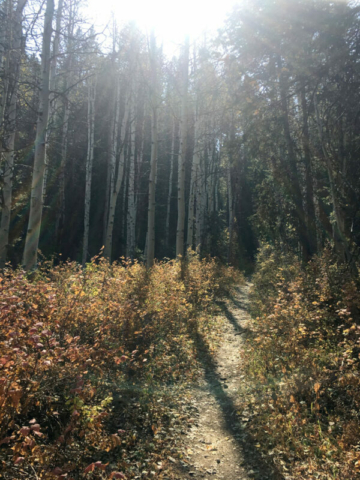 Haunted Porter Fork Trail through the aspens after a wildfire