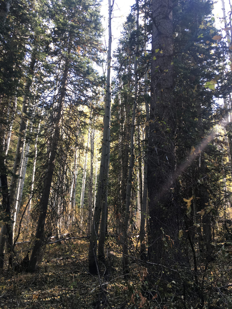 Spending the month of Halloween in the ravaged forest in MillCreek Canyon, compliments of the lightening that ignited Neff's Canyon a couple of weeks ago. Boo!